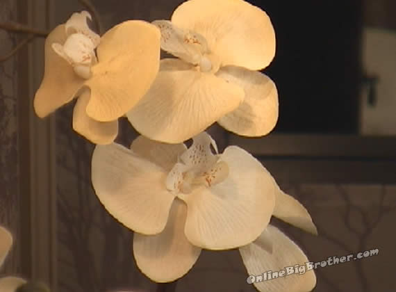 orchids-6-BB14